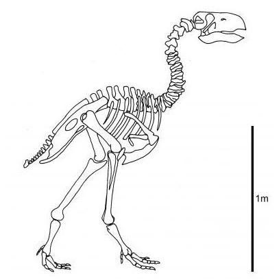 AsGastornis