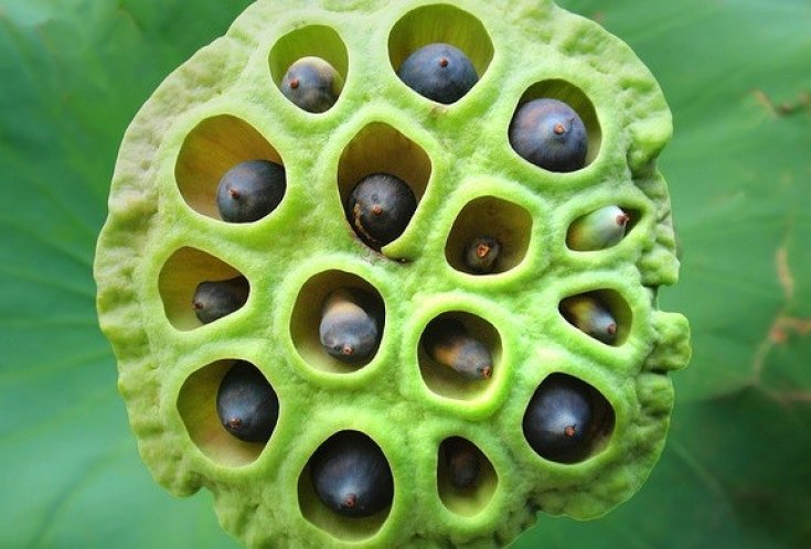 Trypophobia Where The Fear Of Holes Evolved From