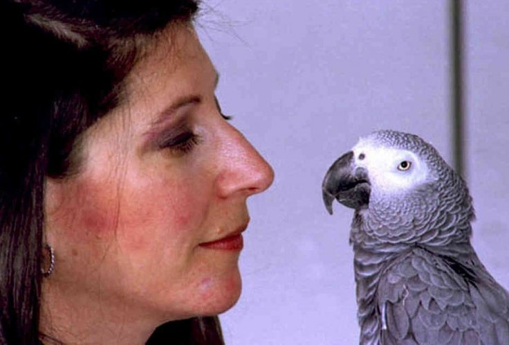 Alex the Parrot, whose last words to his handler were 'I love you.'
