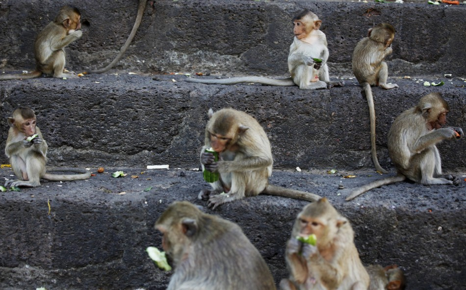 China Monkey Rips Testicle Off Eight Month Old Baby And