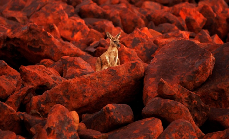 Australian $7 bln iron ore project partners could part ways