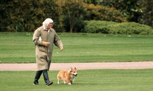 The Queen walks a corgi in the grounds of Buckingham Palace.