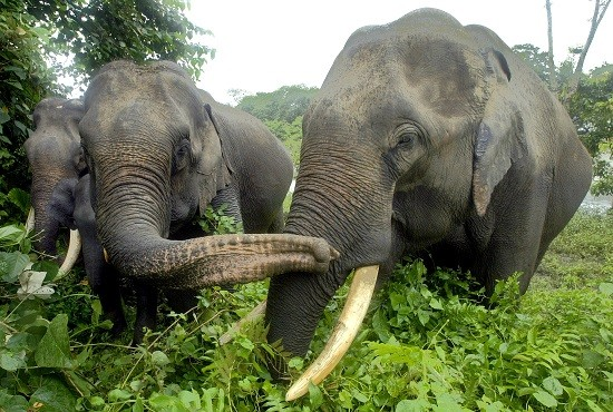 The man was killed by an elephant at Masinagudi National Park in India (Reuters)