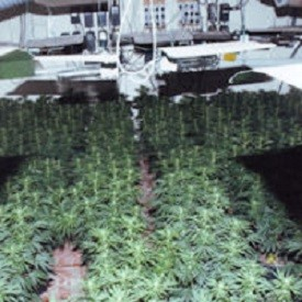 One of the couple's cannabis factories in Kent (Kent Police)
