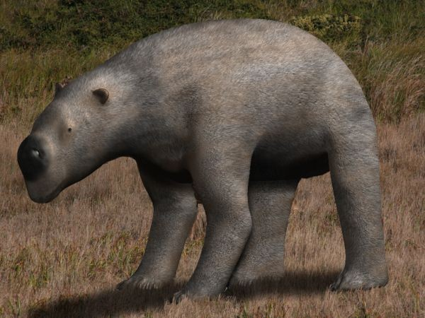 Wombat Fossil Found As Big As Volkswagen Beetle