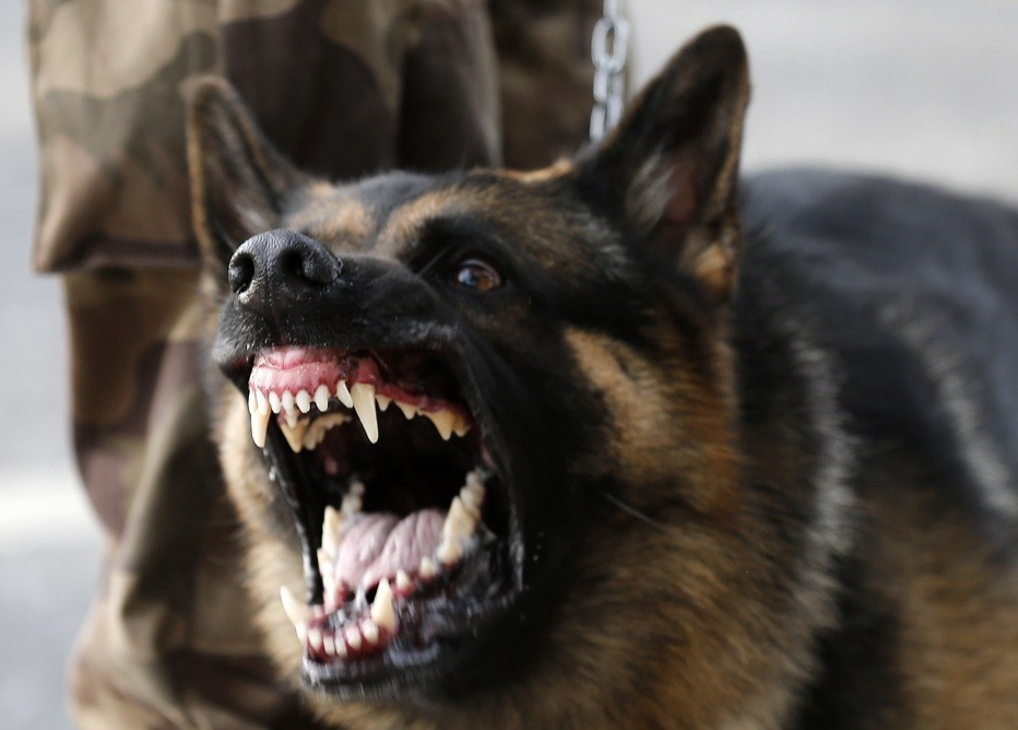 Police dog bit off half of man's penis in South Africa