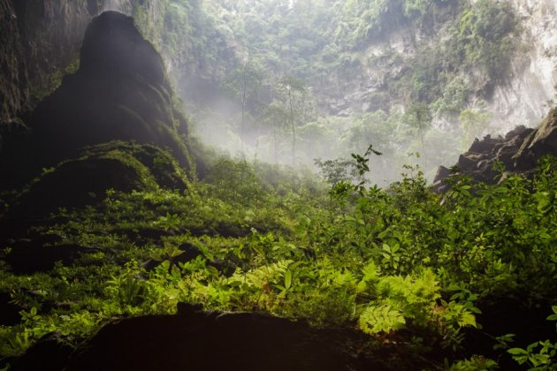 Green pastures and an underground forest is a distinct feature of the Son Doong Cave. (Photo: Oxalis)