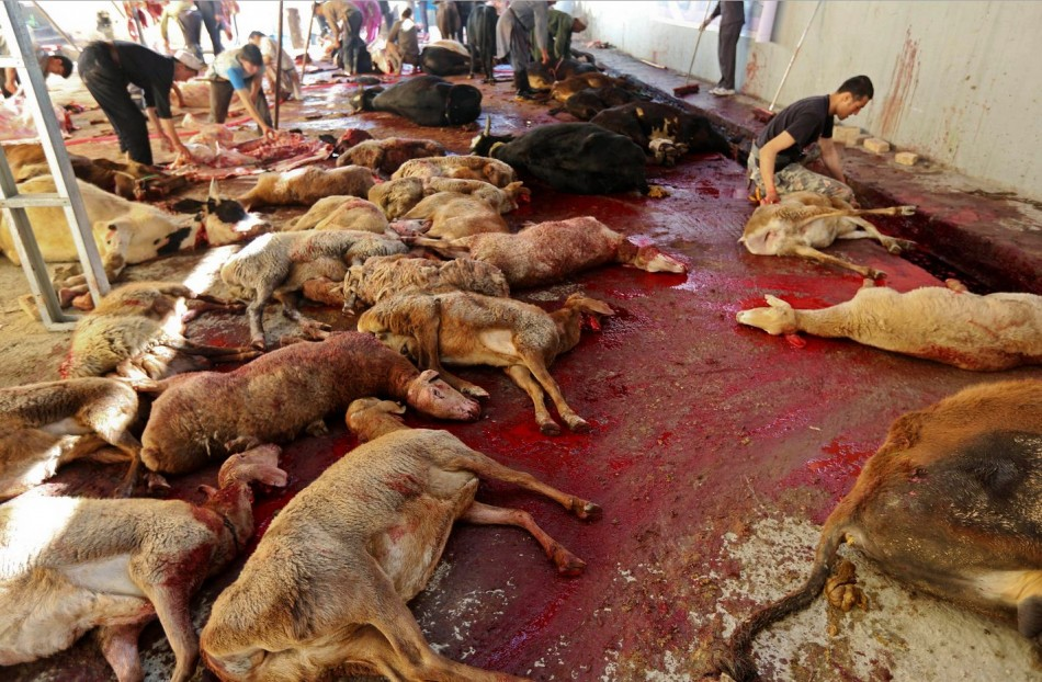 Cows and sheep are slaughtered by butchers on the first day of Eid al-Adha in Kabul. (Photo: Reuters)