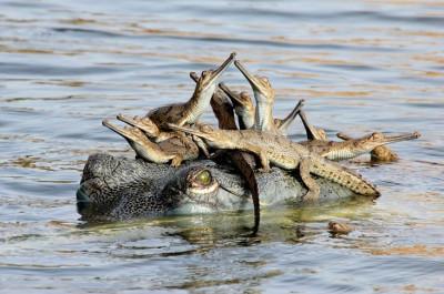 Mothers little headful