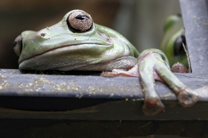 Britons Relished Frog Legs 8,000 Years Before French
