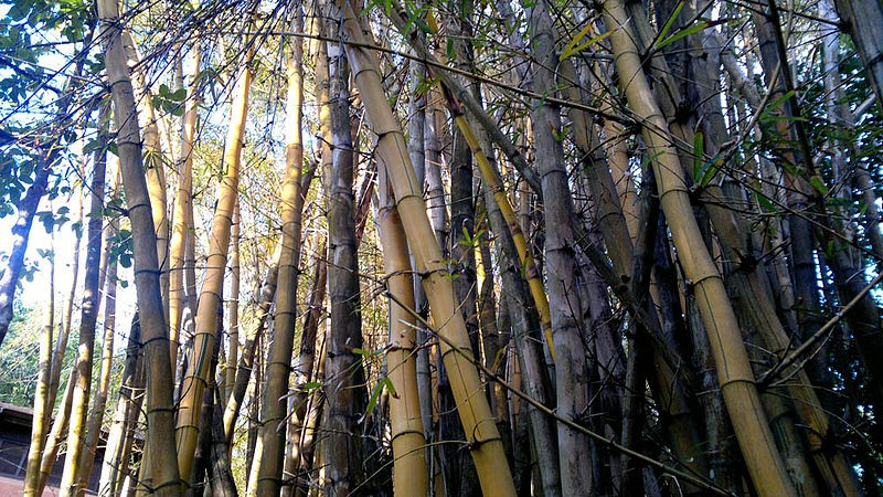 Cosmonauts to wear bamboo undergarments in space