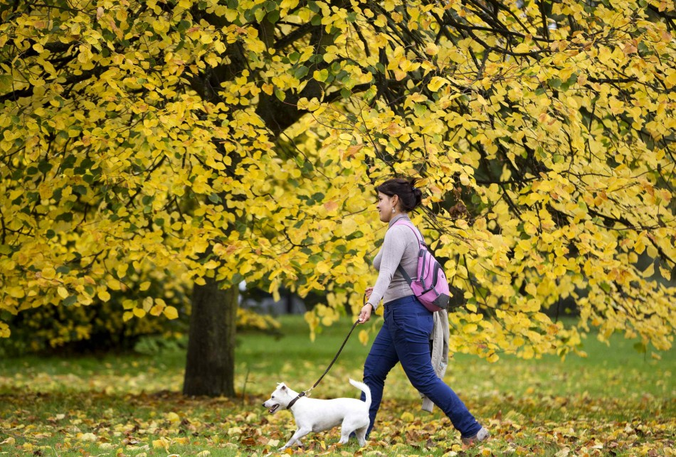A woman walks a dog in Hyde Park in London A woman walks a dog in Hyde Park in London