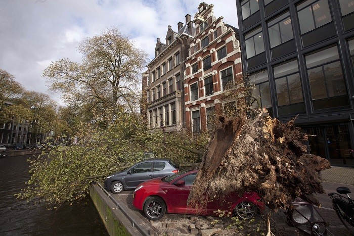 A tree that fell on and killed a woman is seen next to the Herengracht canal in Amsterdam (Reuters)