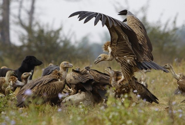 Vultures reportedly fed on the remains of Carolina Bernal Gomez, whom Jose Miguel Tamayo allegedly killed PIC: Reuters