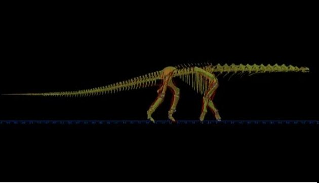 Argentinosaurus walks in never-before-seen images PIC: University of Manchester