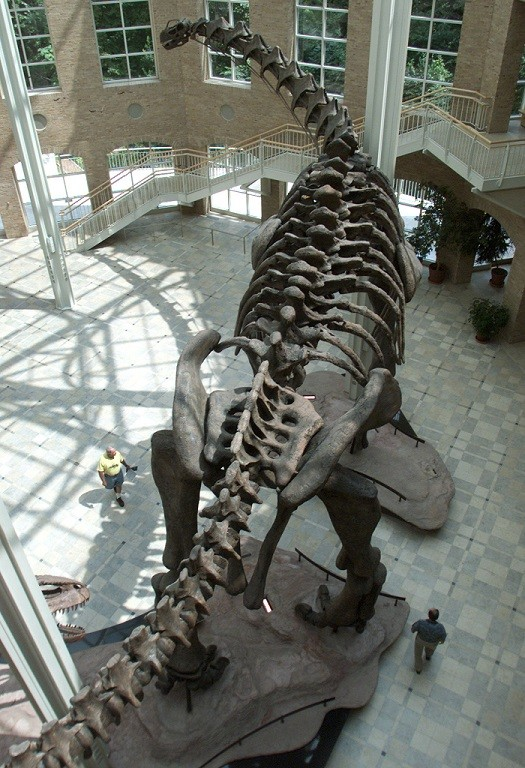 Argentinosaur on display PIC: Reuters
