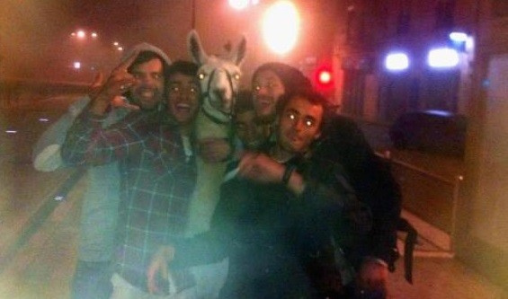 Serge the llama was stolen by the drunk teenagers from a closed down circus  (Facebook)