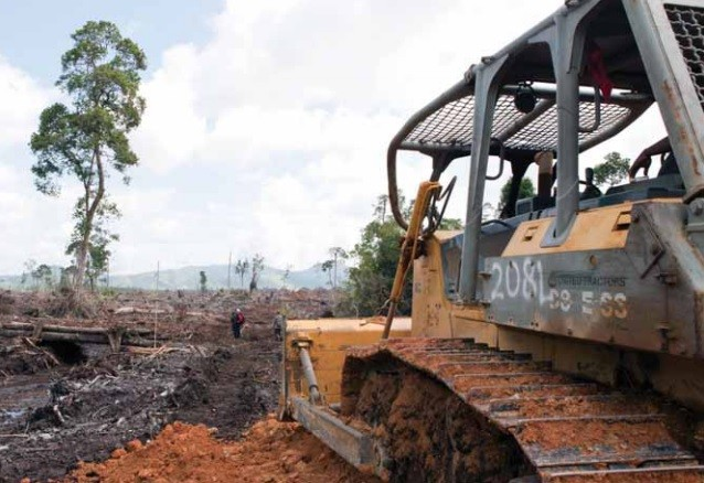 Flattened forest of Ketapang in West Kalimanta after deforestation PIC: Alejo Sabugo/IARI