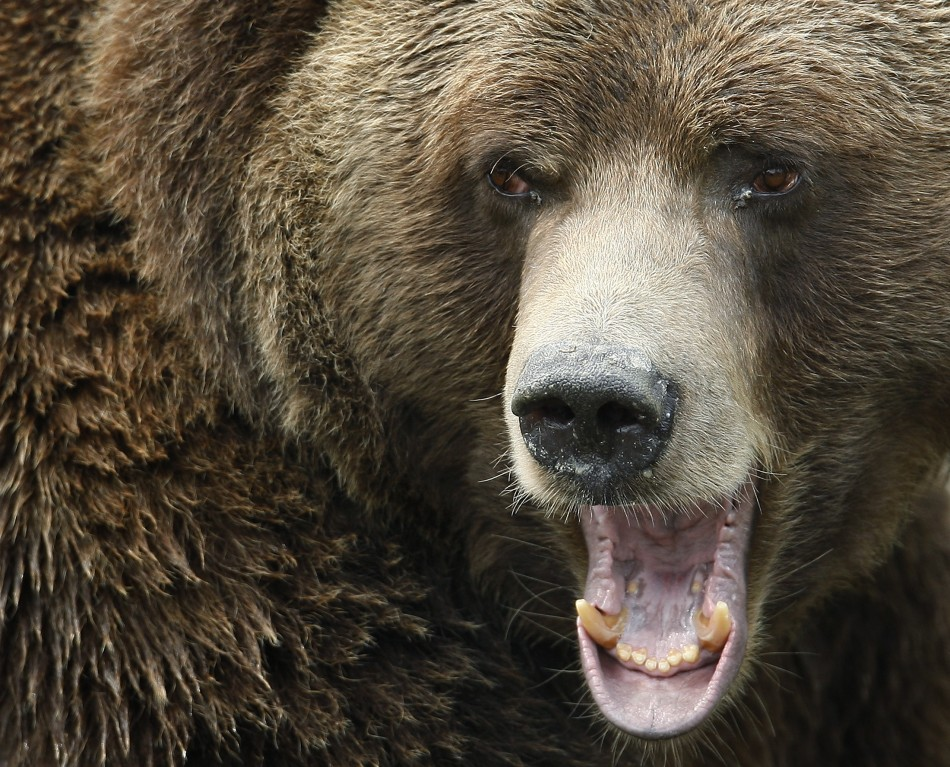 The genetic code of a giant cave bear that lived 400,000 years ago is studied by scientists.