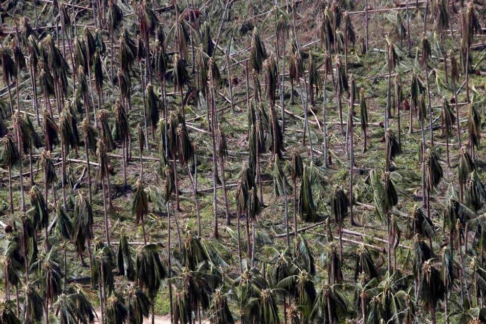 A coconut plantation goes sans fruits following Haiyan. (Photo: REUTERS/Erik De Castro)