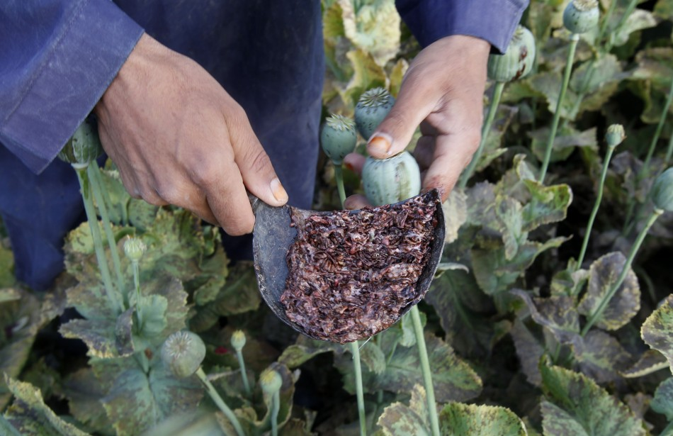 Afghan opium harvest soars record high