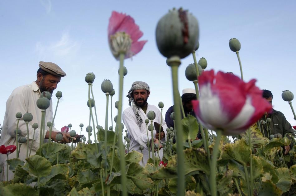 Afghan opium harvest soars record high ahead of US withdrawal