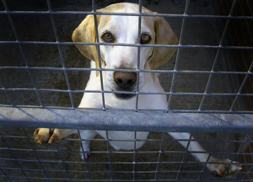 Plans for a new beagle breeding facility to be built in Grimston have been rejected (Reuters)
