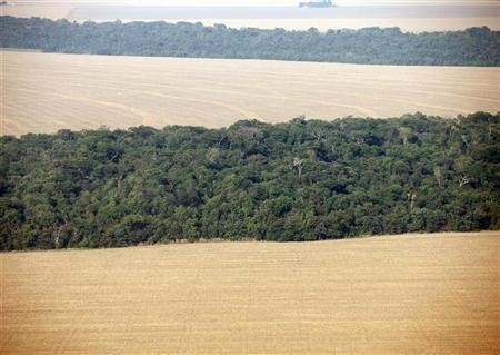 An aerial view of soy plantations flanking the Amazon forest