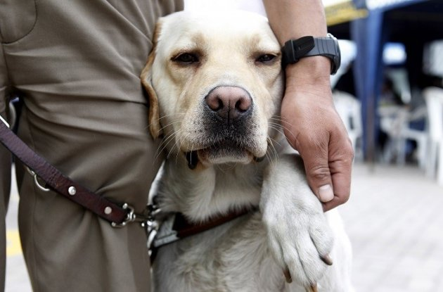 Albert Rizzi's guide dog Doxy become restless after the US Airways flight was delayed by almost two hours. (Reuters)