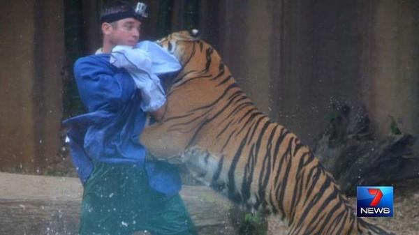 Australian tiger attack