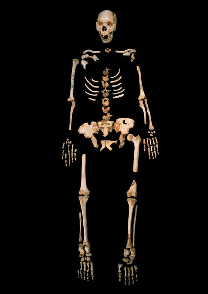 skeleton of a Homo heidelbergensis from Sima de los Huesos