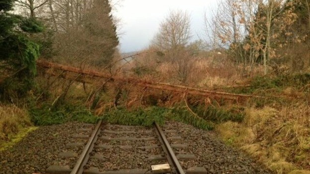 A tree on the line south of Moulinearn level crossing Credit: Twitter/@NetworkRailSCOT