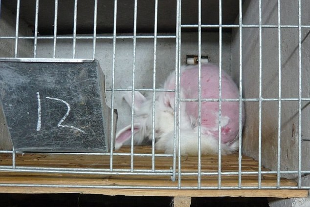 PETA Rabbit Angora Fur