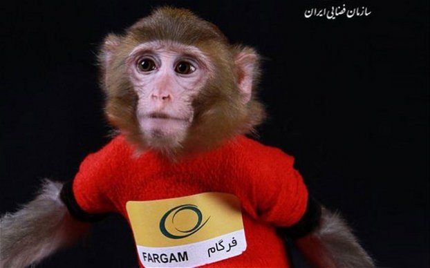 Fargam the space monkey