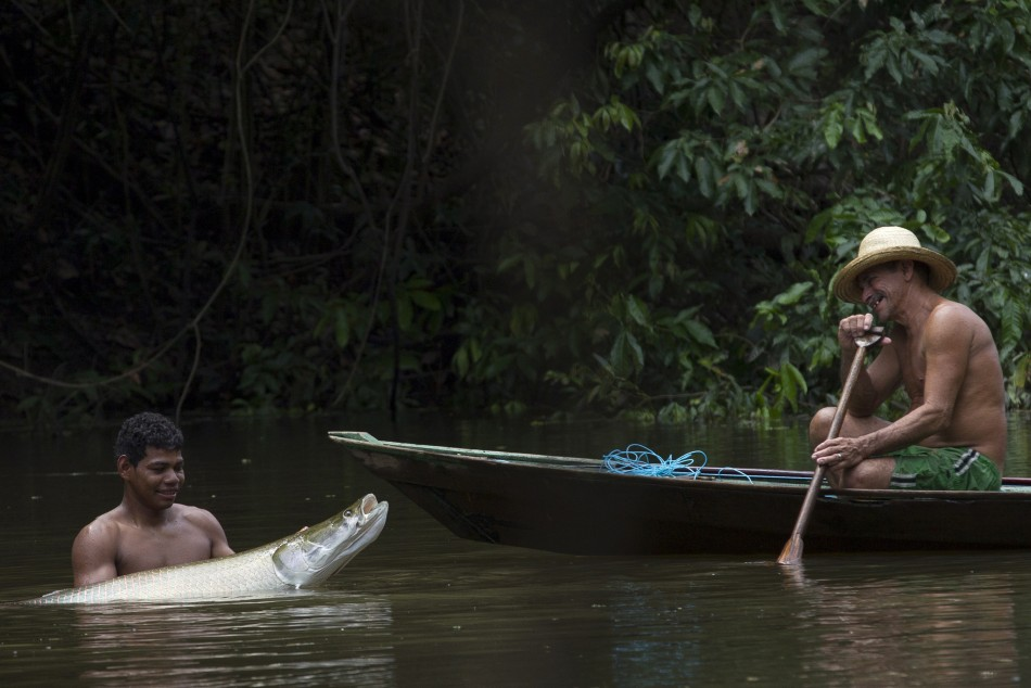 A villager from the Rumao Island community holds a young arapaima or pirarucu, the largest freshwater fish species in South America.