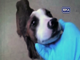 RSPCA state Animal Cruelty Cases up 25%