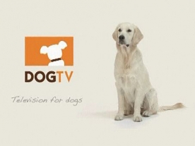 World's First Television Channel Launched For Dogs