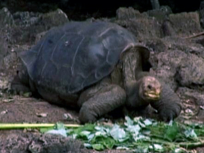 Lonesome George last remaining Giant Tortoise Dies