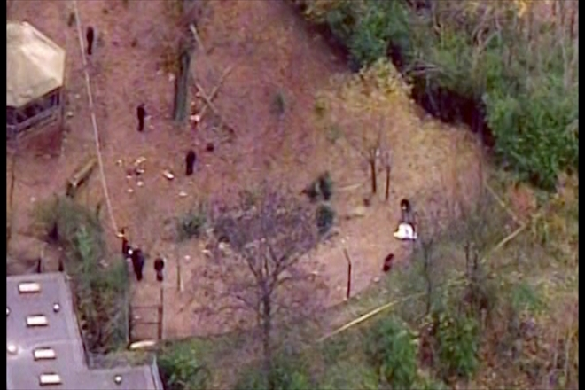 Toddler mauled to death by dogs at US zoo