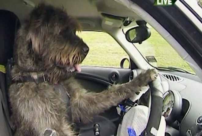 Dogs taught to drive in New Zealand