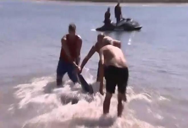 British tourist pulls shark away from Australia beach