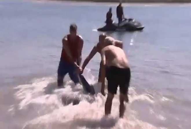British tourist pulls shark away from Australia beach
