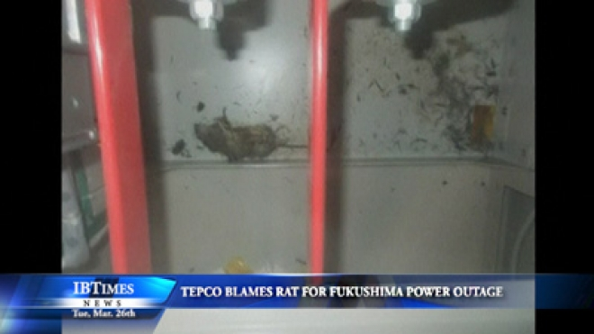Tepco Blames Rat For Fukushima Daiichi Power Outage