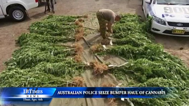 Australian Police Seize More Than 300,000 US Dollars Worth Of Cannabis