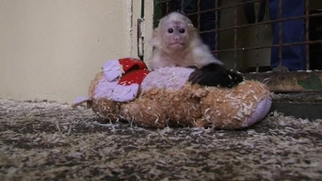 Bieber Pet Monkey Settles In At New German Home