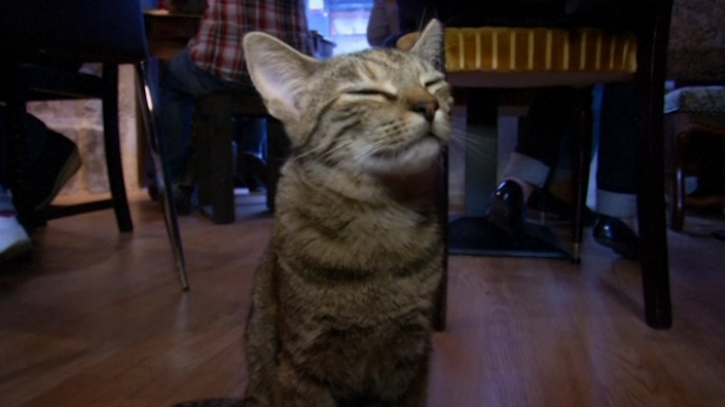 First Parisian Cat Cafe Opens To Animal Lovers