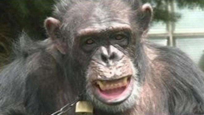 New York Lawsuit Seeks Legal Personhood For Chimps