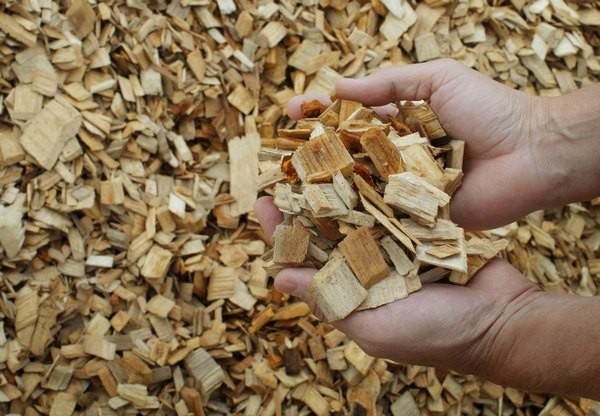 Manager of IT and HR Dan Bird holds wood chips that will be made into paper pulp at the Old Town Fuel and Fiber mill in Old Town, Maine, June 2, 2009.