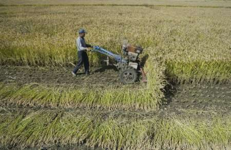 China needs rural financial reform to ease poverty: ADB