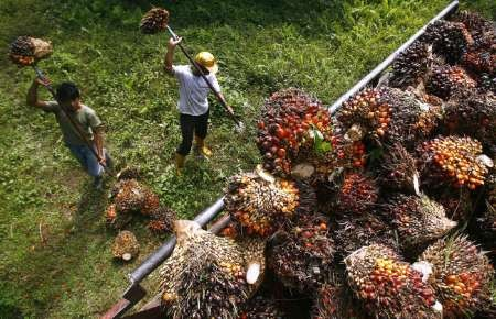 Analysis: Price boom puts palm oil on emerging markets' radar